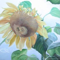 """Grandmother's Sunflower"""